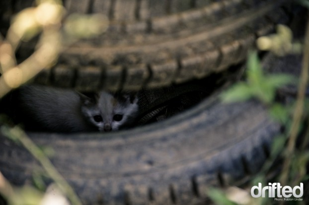 Even the kitten in the tire rack were watching