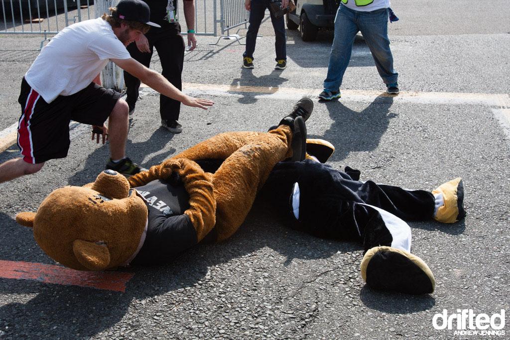 Bear KO over Penguin Fight