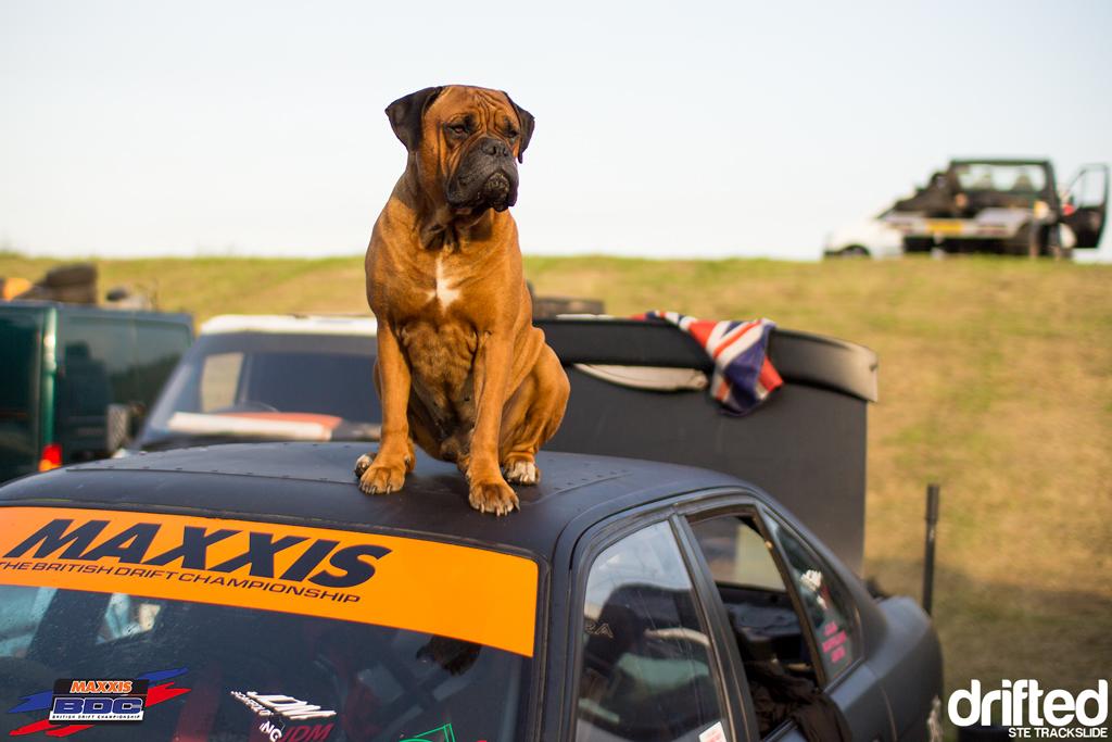 Ste Trackslide BDC Team Event 2013 Meathead Dog 3