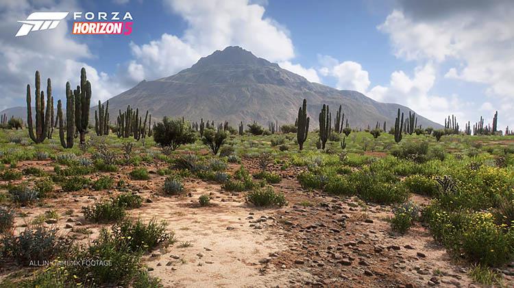 fh5 desert cactus scenery graphics